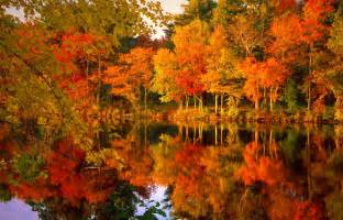 fall color the amazing beautiful things in nature professional