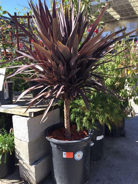 images  tropicaldrought resistant plants