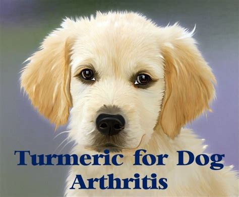turmeric for dogs dosage turmeric for arthritis 8 evidence based benefits dosage and recipes turmeric
