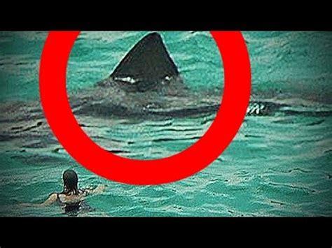 real megalodon shark sightings caught on camera!? (biggest