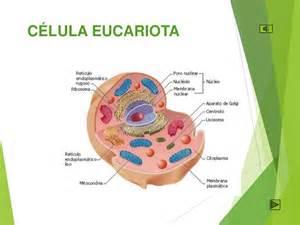celula eucariota 74915 usbdata