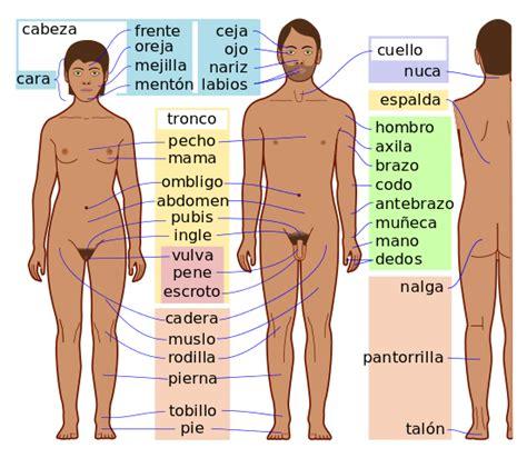 leer libro e el cuerpo humano human body enciclopedia increible larousse amazing larousse encyclopedia en linea gratis file human body features es svg wikimedia commons