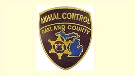 Oakland County Records Free Oakland County Animal Checking For Unlicensed Dogs