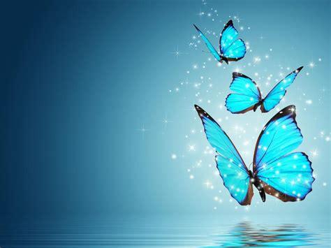 fantasy butterfly wallpaper    blue morpho