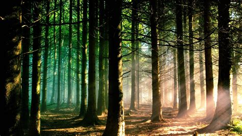 tumblr themes free forest forest hd wallpapers wallpaper cave