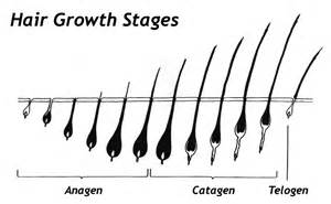 stages of hair clear4life electrolysis frequently asked questions about