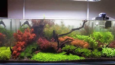 Aquascape Waterfall 120 Gallon Dutch Hybrid Planted Aquarium Youtube