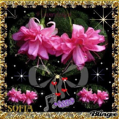 imagenes flores de amor bellas flores de amor sofia fotograf 237 a 120144664