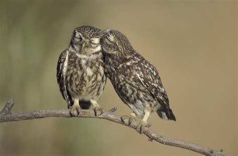 owl lover animals in love owls goodtoknow