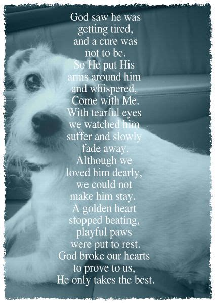 comforting quotes about death of a dog 25 best ideas about pet loss quotes on pinterest dog