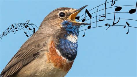 Tas Paketan 5in1 R Blue animals singing opera cbbc