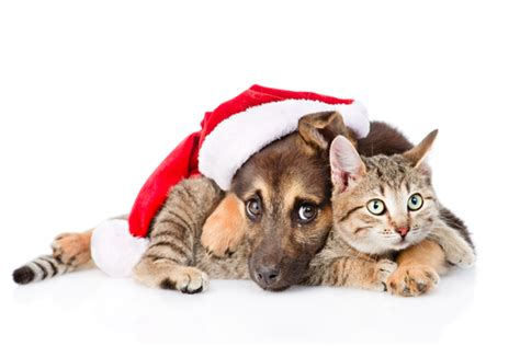 christmas pet gifts readers digest