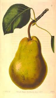 draw pear images amp pictures becuo