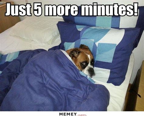 Meme Bed - lazy dog meme