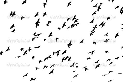 black and white wallpaper with birds tumblr black and white birds backgrounds background bird