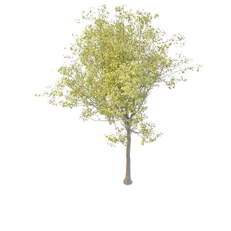 cherry tree 3ds max black cherry tree 3d model 3ds max files free modeling 32357 on cadnav