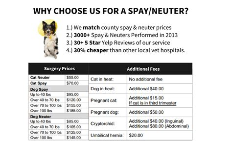 price to spay a how much does spaying a cat cost cats