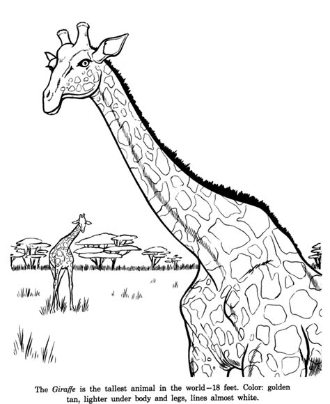 giraffe coloring pages pdf animal drawings coloring pages giraffe animal