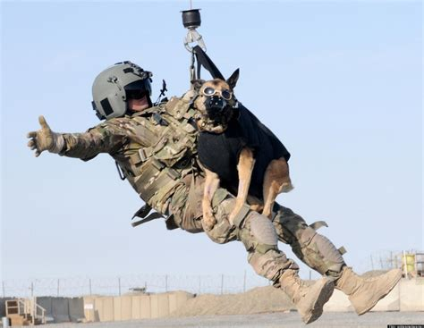 working dogs working goes airborne during exercise photo