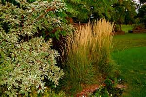 astrid s garden design ornamental grasses