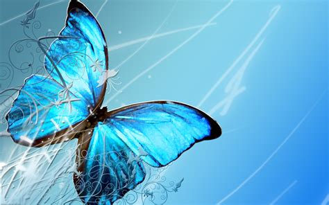 butterflies full hd wallpaper and background image beautiful butterfly wallpapers hd pictures one hd