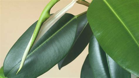plants  purify  air   environment zululand observer