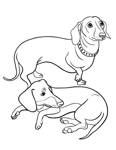 dachshund puppies coloring pages long haired dachshund coloring pages coloring pages