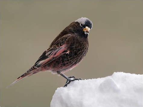 Birding Albuquerque To Santa Fe Audubon New Mexico