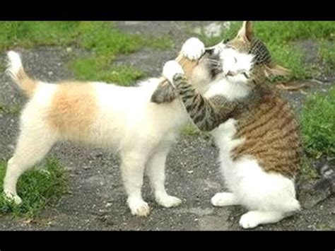 funny cats meeting cute puppies compilation  youtube
