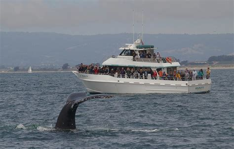 monterey whale watching boats monterey bay whale watching santa cruz whale watching