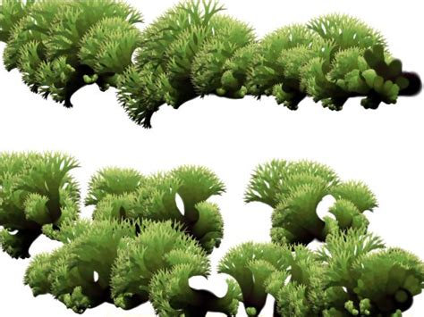 shrubbery types