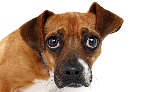 how to help a constipated how to help a constipated animal friends