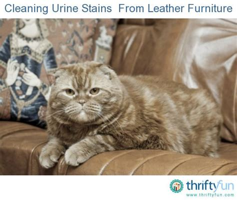 remove urine smell from couch 25 best ideas about cleaning leather furniture on