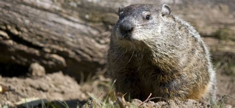 groundhog day repeat small business owners should not repeat groundhog day