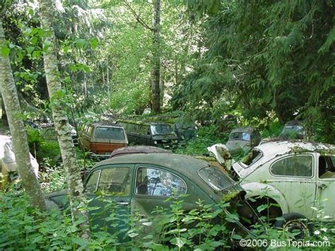 Volkswagen Salvage Yard by Forgotten Vw Salvage Yard With Of Volkswagen Bugs