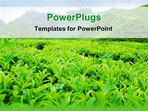 Powerpoint Template Green Leafy Tea Plantation 21237 Tea Ppt Template Free