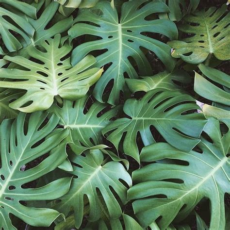 tropical plant leaves 25 best ideas about tropical plants on