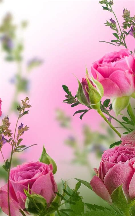 imagenes de flores whatsapp fondos para whatsapp de flores wallpapers pinterest