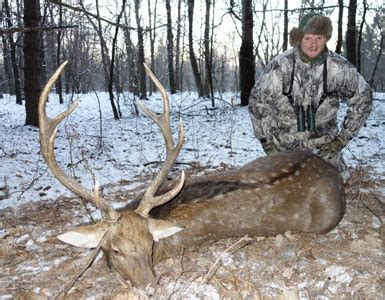 hunting dybowskis sika stags in ukraine australian