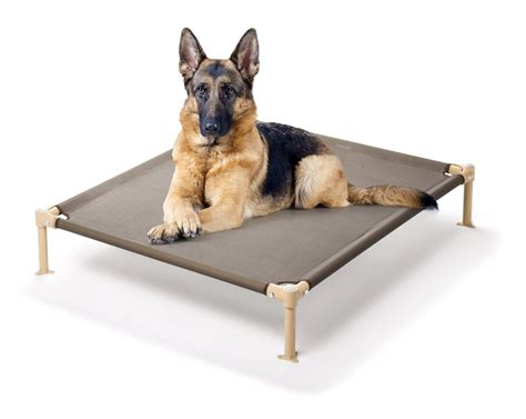 high dog beds 5 best elevated pet bed provide all year round comfort