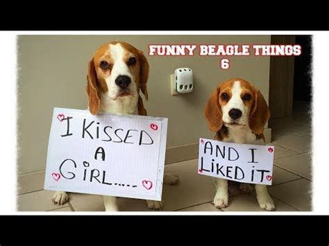 dogs 101 beagle beagle dogs 101 vidoemo emotional unity