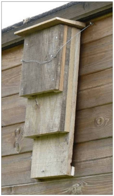 bat house ideas worth hanging around for rid your