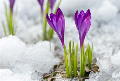 flowers that bloom only in winter winter bloom for your garden