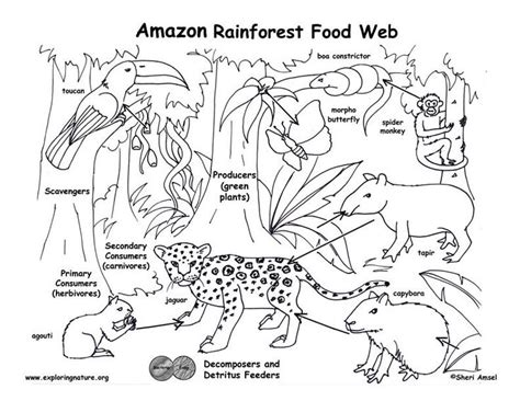 jungle habitat coloring page best 25 rainforest ecosystem ideas on pinterest