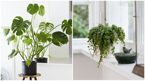 kitchen plants that don t need sunlight 4 plants that don t need sunlight rl
