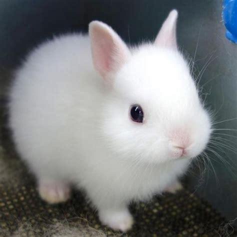 Gantungan Bunny Kopenhagen Bunny 1 white bunny s