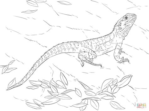 water dragons coloring pages australian water dragon coloring page free printable