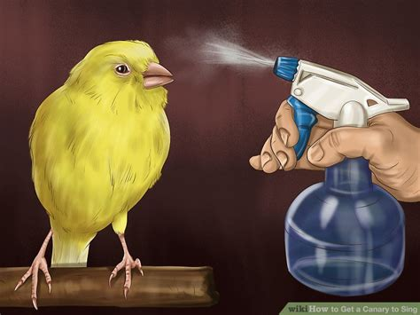 how to your to stay in the cage 3 ways to get a canary to sing wikihow
