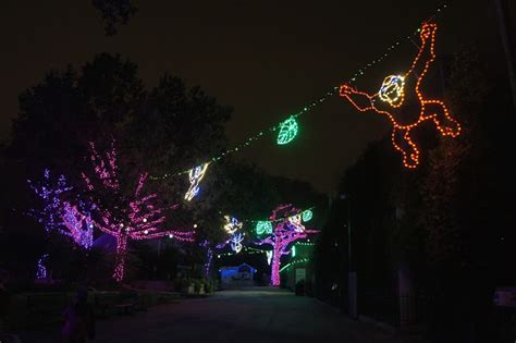 san antonio zoo lights a new holiday tradition family