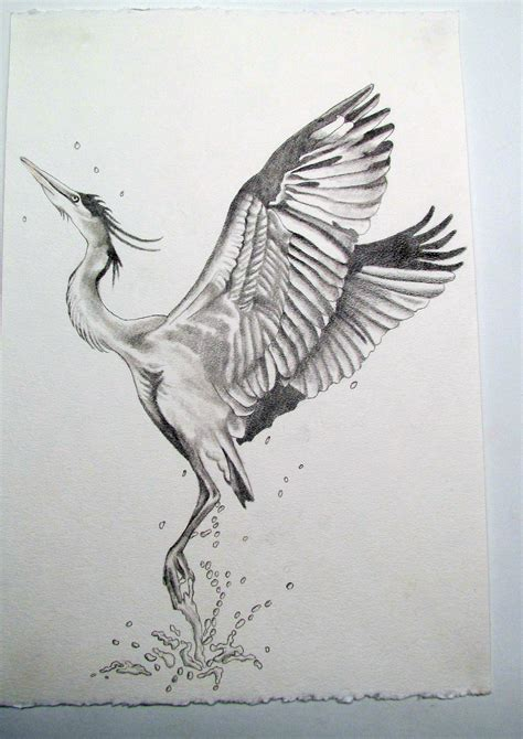 blue heron sketch